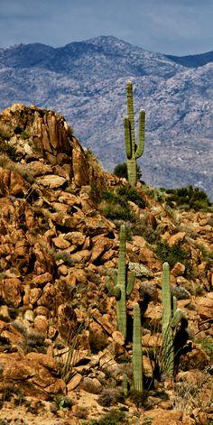 Desert, mountains and saguaro cactus in Skull Valley, Arizona #GeorgeTupak