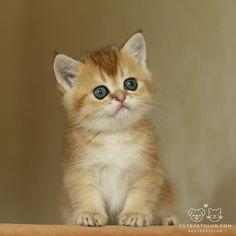 From @gaure_cats #cutepetclub [source: http://ift.tt/1Tx8Lgw ]