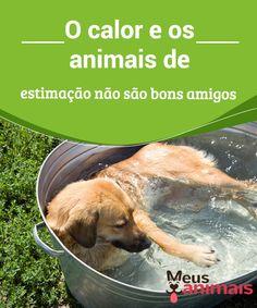 O calor e os animais de estimação  O calor e os #animais de estimação não são bons #amigos, por isso fique atento aos sinais do seu #animal quanto ao #calor em excesso. #Saúde