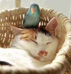 bird on cat