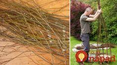 Tento muž odrezal vŕbové prútie a nechal ho zakoreniť v črepníku: Tento nápad oživí každú záhradu, balkón či terasu a môžete to mať celkom zadarmo!