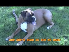 A funny video and song about a pug with a unique way of running!
