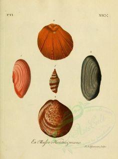 shells-04507 - image [2121x2858]