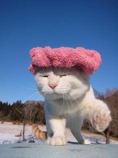 This is Mr. Shiro, from my favourite Japanese cat blog http://kagonekoshiro.blog86.fc2.com/