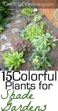 Hey all you shade gardeners... I challenge you to think outside the 'hosta box' and add some amazing color to your shade gardens. Here's a list of 15 Colorful Plants for Shade Gardens! | GetBusyGardening.com