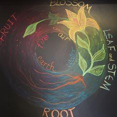Cycle of plant life. Waldorf grade five botany.
