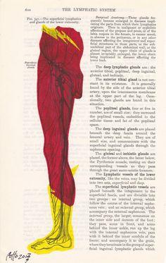 illustrations anatomie
