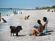 MustDo.com #vacation, #Florida. Brohard Beach and Paw Park in Venice, Florida is the area's only beach where dogs can be off-leash.
