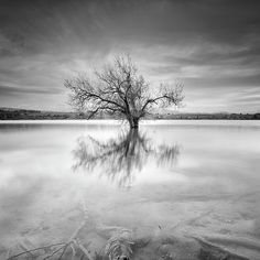 mono,monochrome,black and white,tree, water ,tree,forest,reflection,sunset, sunrise,lake,sunrys, mountain,water,sky,clouds,horizontal, outdoors, nature, landscape,reflections,exterior, europe, photography, landscapes, spain, granada,peace,