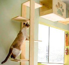 Com o objetivo de criar uma casa bonita e pensada para os animais, decoradores e lojas de mobiliário pet, voltadas principalmente para os gatos, apostam em projetos e objetos funcionais e de bom go…
