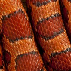 Reptile Scales - Gorgeous colours and patterns.