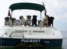 Adorable Pugs on their PugBoat Pug Love, I Love Dogs, Funny Boat Names, Dogs On Boats, Tug Boats, Amor Pug, Pug Photos, Pug Pics, Pugs And Kisses