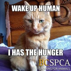 Persimmon is ready to be your alarm clock in exchange for giving her a loving forever home! Meet her at the BC SPCA Victoria Branch.