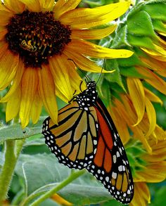 Bee and Butterfly by Amy V. Miller, via Flickr