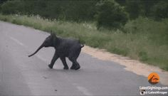 Stop Everything And Look At This Baby Elephant Playing With Birds