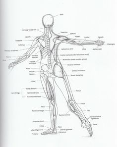 Dancer Anatomy