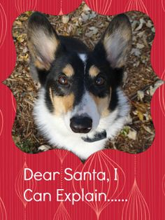 The Corgis' Christmas Wish List