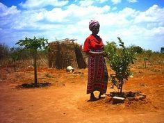 Citrus fruits planted on Arborloo pits