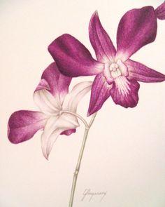 Orchidee, originale arte botanica acquerello pittura