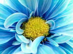 close up of flowers - Google Search