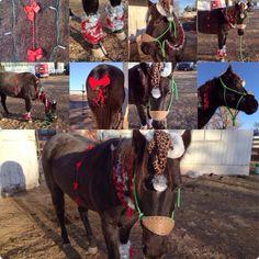 Jet Costume Contest, Christmas Costumes, Goats, Jet, Animals, Animais, Christmas Fancy Dress, Animales, Animaux