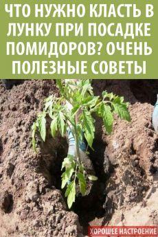 Vegetable Garden Design, Vegetables, Plants, Tomatoes, Gardening, Raised Vegetable Gardens, Gardens, Sodas, Useful Life Hacks