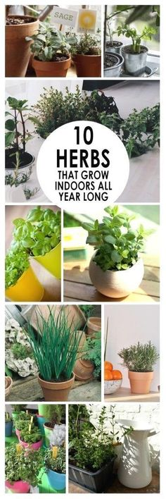 Garden Tips Indoor herb gardening herb garden hacks gardening hacks popular pin gardening tips and tricks gardening 101 gardening tips Now is the time to start looking a.