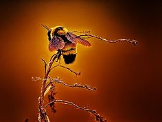 All gardens need Bees check out this mans art if you could