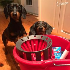 """""""Hi there. We're here to help distract you from your chores with our cuteness. Also, see if you can find the poop we hid for you to test your thoroughness."""" ~ Crusoe"""