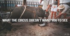 """Petition · Ban Circuses and Traveling Acts with Animals! Say """"NO"""" to Supporting Animal Abuse and Slavery!!! · Change.org"""