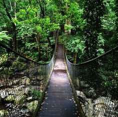 Tip-toe across a wooden bridge suspended over a rainforest. | 23 Things You Didn't Know You Could Do In New South Wales