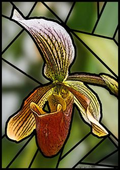 Stained Glass Orchid (artist Roger Gordy)
