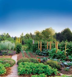 You can achieve natural insect control in your garden without toxic pesticides. Just follow these easy pest control strategies.