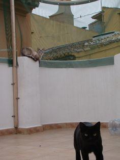 #Cats, #Gatos Choped y Croqueta