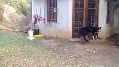 Este pobre perro se llevo el susto de su vida #HoooooolaGato