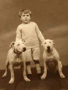 ( - p.mc.n. ) Old english bull terriers