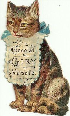 Chocolat Cat - Giry - Marseille