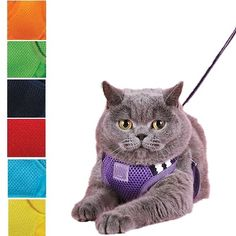 A cat harness with an easy all-in-one step-in and go design. Available in 7 colors. Cat Leash, Cat Harness, Cat Toilet Training, Cat Merchandise, Adventure Cat, Youtube Cats, Cat Hacks, Cats Bus, Cat Enclosure