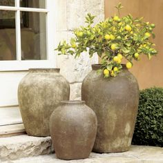 Olive Jars  | Crate and Barrel These would look great in my sun room!