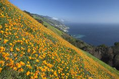 Big Sur, California.  We called it home for three years.  Still holds a piece of my heart.