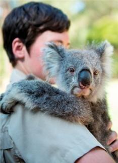 ヒールスビル・ワイルドライフサンクチュアリーでオーストラリアの動物たちと触れ合う。メルボルン旅行の観光アイデア。