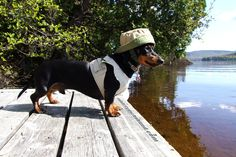Cute Wiener Dog Fishing Outfit