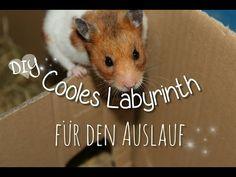 YouTube Labyrinth Hamster Hamster Care, Labyrinth, Cardboard Crafts, Youtube, Animals, Terrarium, Diy, Swimming, Dwarf Hamster Toys
