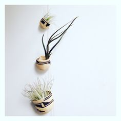 Kenyan baskets from my mum, repurposed as vessels for airplants whilst they're waiting for new homes...