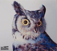 Потрясающие совы от художника John Pusateri