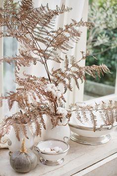 dead/dried bracken fern