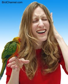 Parrots are loud. Here's how to get some peace and quiet. 8 Ways to deal with a loud Parrot!