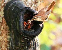 Simple bird feeder design with a clip