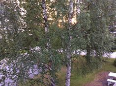 Finland, Plants, Summer, Summer Time, Plant, Planets