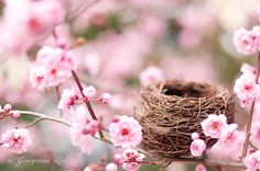 Nature Photography - Spring Plum Blossoms with Bird Nest, Romantic Pink Wall Decor via Etsy. Rosa Rose, Spring Sign, Spring Has Sprung, Beautiful Birds, Mother Nature, Pretty In Pink, Wedding Decor, Nature Photography, Spring Photography